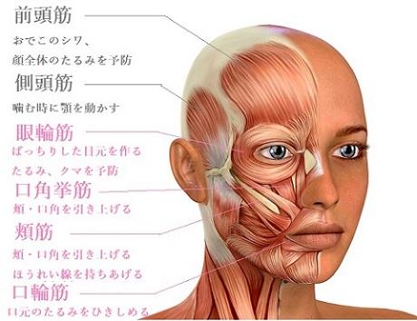 線 ほう 筋肉 れい ほうれい線の原因は「筋膜の癒着」「筋肉の衰え」にあった!顔コリをほぐすおうち美容を紹介!